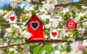 Picture flowers, branches, tree, heart, spring, morning, houses, Apple, macro, spring, sunlight, birdhouses, birdhouse