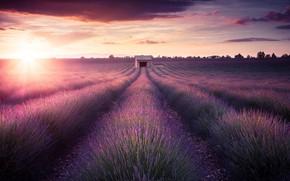 Picture Landscape, Sunset, Provence, Lavender