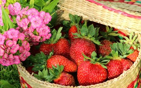 Picture grass, flowers, close-up, basket, strawberry, berry, red