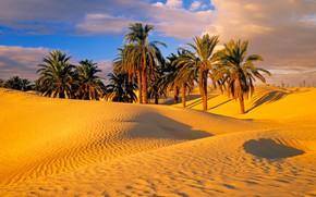 Picture sand, palm trees, desert, dunes