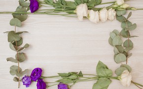 Picture flowers, frame, pink, flowers, purple, eustoma, frame, eustoma