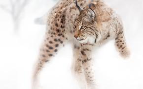Picture snow, Feline, Oleg Bogdanov