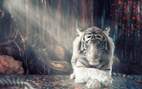 Picture white, tiger, stay
