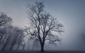 Picture fog, Park, tree
