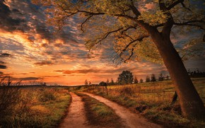Picture road, sunset, tree