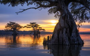 Picture forest, trees, sunset, branch, trunk, pond, the hollow