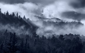 Picture Fog, Forest, Spruce forest