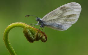 Picture close-up, butterfly, batterfly