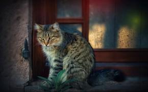 Picture cat, window, cat