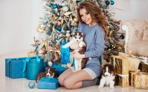 Picture dogs, pose, smile, mood, model, puppies, gifts, New year, tree, husky, Natalia Naidenko, Mozhayskiy Julia ...