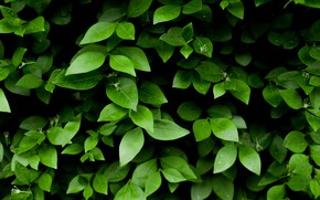 Picture Nature, Leaves, Green, Plants, Flora, Sheets, by Skitterphoto, Green Leafy Plant
