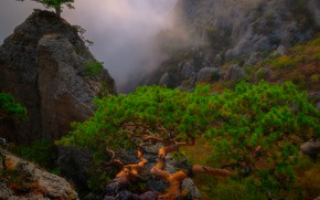 Picture clouds, trees, landscape, mountains, nature, fog, stones, rocks, the evening, pine, Crimea, Alexander Plekhanov