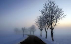 Picture winter, road, fog