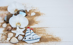 Picture white, flowers, background, shell, boat, orchids, Olena Rudo