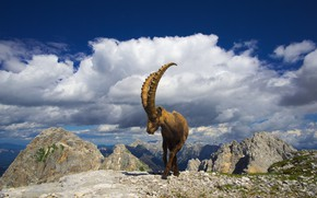 Picture the sky, clouds, mountains, pose, blue, stones, rocks, goat, horns, mountain, goat, mountain goat