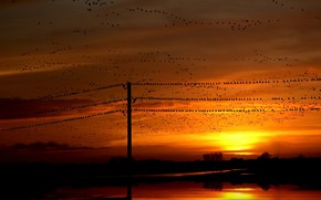 Picture sunset, birds, night, nature, power lines