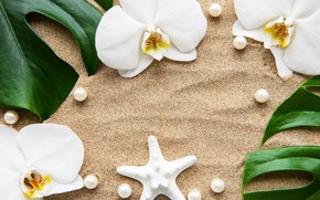 Picture sand, leaves, flowers, white, Orchid, flowers, sand, orchid, pearls, spa, starfish, zen, perls