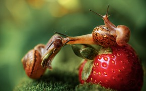 Picture macro, moss, snails, family, strawberry, berry