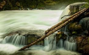 Picture nature, stones, shore, vegetation, stream, log, pond, logs