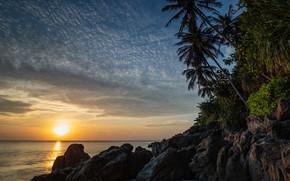 Picture sea, sunset, palm trees, coast, Thailand, Andaman Sea, The Andaman sea, Talend, Lanta Yai, Ko …