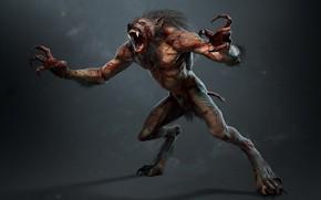 Picture monster, beast, werewolf, lycanthrope, werewolf, lycanthrope, lycan, The Witcher 3 Wild Hunt, The Witcher 3 …