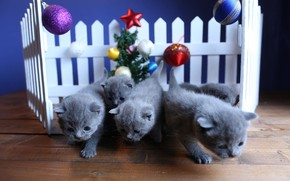Picture balls, decoration, cats, kitty, background, holiday, toys, the fence, new year, Christmas, kitty, kids, herringbone, ...
