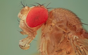 Picture macro, fly, background, portrait