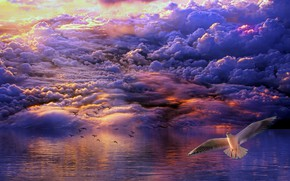 Picture clouds, birds, the ocean, dawn