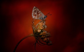 Picture butterfly, plant, butterfly