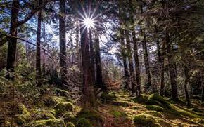 Picture forest, the sun, landscape, nature, beauty