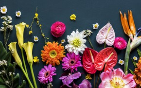 Wallpaper flowers, background, colorful, flowers, bright, various