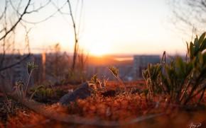 Picture nature, sunset, macro