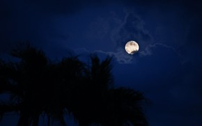 Picture the sky, clouds, trees, night, nature, the moon, the full moon