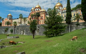 Picture nature, palm trees, cows, Landscape, the monastery, Abkhazia, New Athos