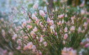 Picture drops, flowers, bokeh