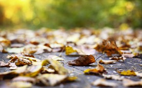 Picture sadness, autumn, leaves, nature, Park, falling leaves, autumn, September, the colors of autumn, fall