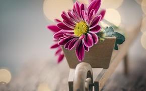 Picture flower, Board, car, bokeh