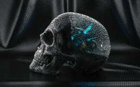 Picture transparency, skull, teeth, material, Skull Study