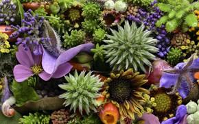 Picture macro, flowers, texture