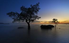 Picture sunset, lake, tree, stone, glow