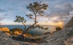 Picture sea, autumn, the sun, rays, landscape, sunset, nature, Crimea, pine, New Light