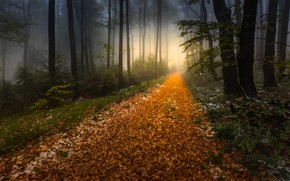 Picture autumn, forest, light, snow, trees, branches, fog, foliage, path