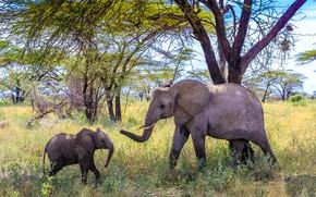 Picture love, the elephant, elephant