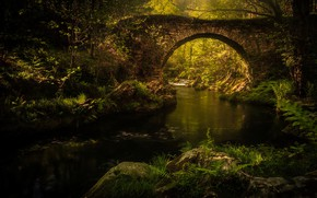 Picture greens, summer, leaves, water, light, trees, branches, bridge, green, river, stream, stones, thickets, vegetation, foliage, …