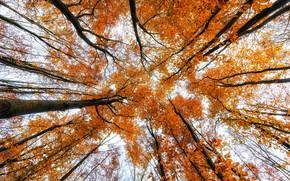 Picture trees, autumn, nature