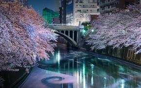 Picture bridge, channel, Tokyo, Japan, the cherry blossoms, Meguro