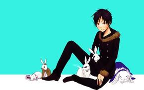 Picture rabbits, guy, Durarara, Durarara, Of Izaya Orihara