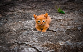 Picture baby, blue eyes, ginger kitten, baby, on earth