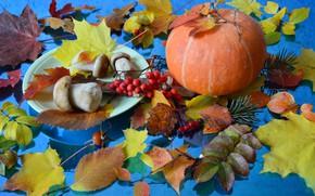 Picture autumn, leaves, mushrooms, pumpkin, still life, needles