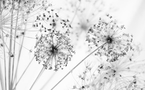 Picture flowers, balls, stems